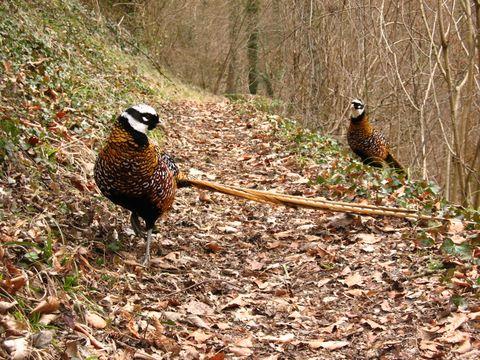 Faune très amicale rencontrée durant une randonnée près de Poilvache, à quelques km de Dinant