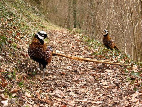 Very friendly wildlife encountered during a walk near Poilvache, a few km from Dinant
