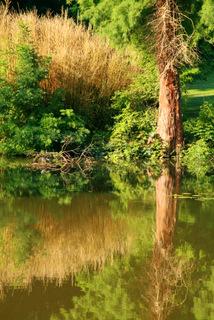Quiet summer morning in the Solvay Park (La Hulpe)