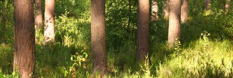 Un matin tôt dans les bois près du château de Rixensart