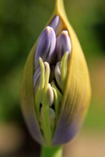 Flowers at the Vrijbroek Park, near Mechelen