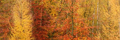 Autumn in the Solvay Domain (La Hulpe)