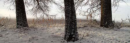 Les groupes de 3 arbres sont un thème récurrent dans le parc