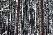 La neige recouvrant tout transforme un bois familier en un univers fantastique