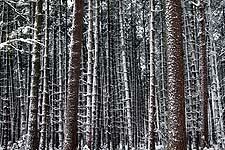 Snow covering everything converts a familiar wood into a fantastic universe