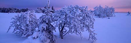 Frost at sunrise - Baraque Michel