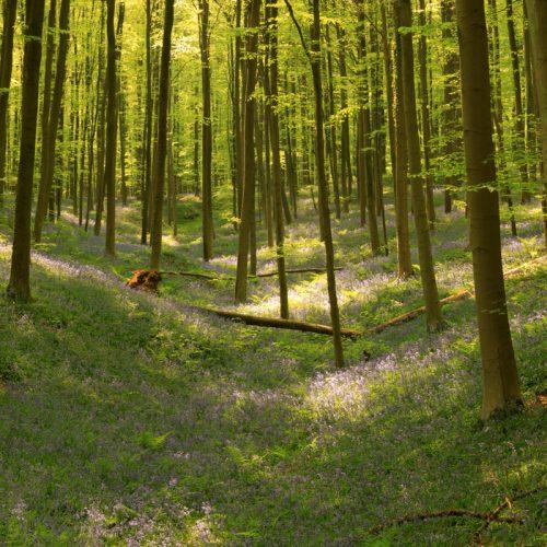 22 avril 2011 dans le bois de Hal