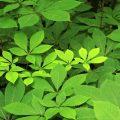 Un de mes groupes de plantes favoris au domaine Solvay, à La Hulpe