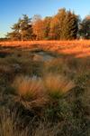 Lever de soleil venteux dans la Fagne de Malchamp, près de Spa, Hautes Fagnes