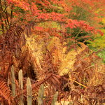 Colourful mess of shrubs and ferns
