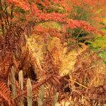 Fouillis coloré de buissons et de fougères