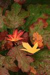 Détails de feuilles d'automne