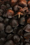 A colony of dark mushrooms thrives on the dead leaves