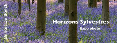 Horizons Sylvestres - exposition photo
