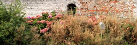 Boîte aux lettres perdue dans les fleurs