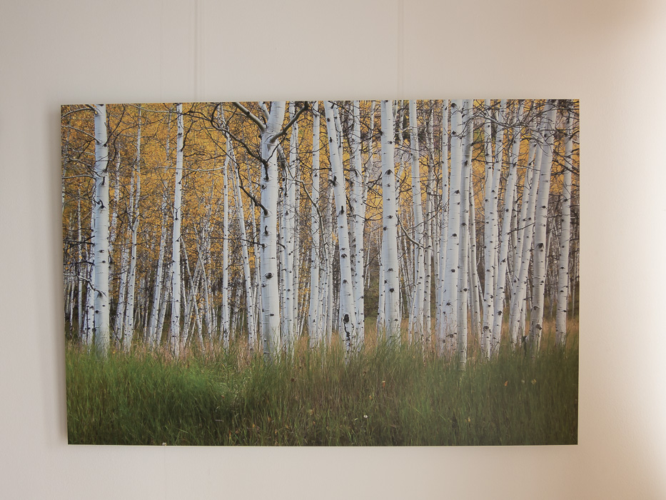 Aspens colours - Dibond direct print (90x60 cm)