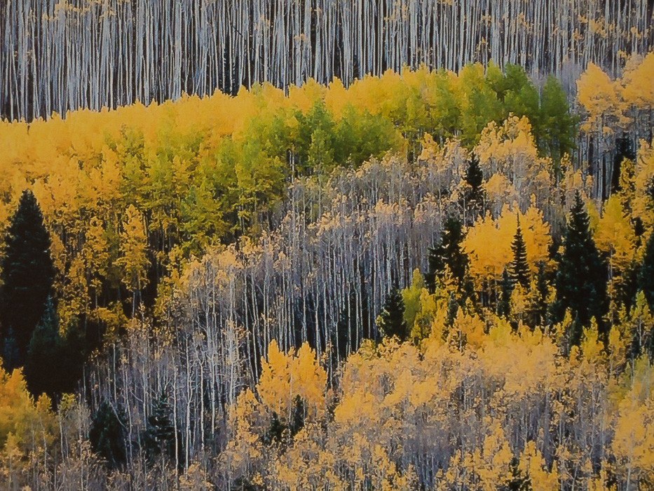 Maroon Creek valley, near Aspen, CO - Details of the Dibond print