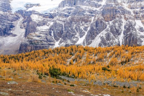 Larch Valley (Banff National Park, Alberta)