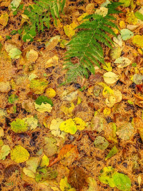 Autumn mix (Ardennes, Belgium)