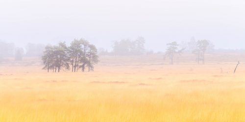 Woody island in the fog