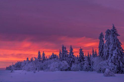 Snowy dawn at the Baraque Michel