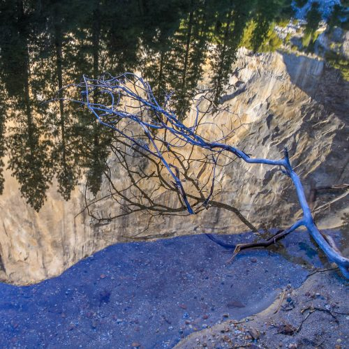 Tree branch and reflection of El Capitan