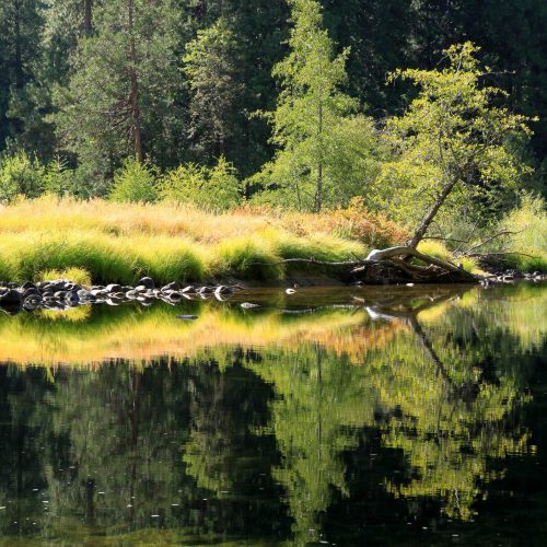 Reflection on Merced River