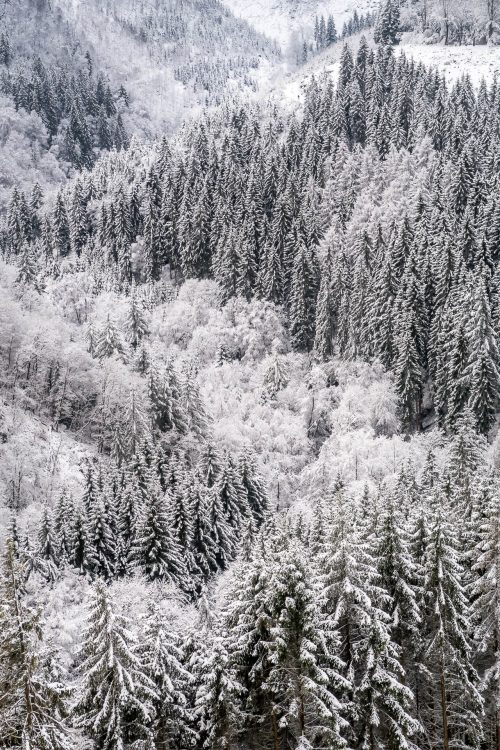 The Warche Valley under the snow (Belgium)