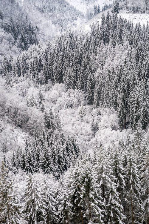 Vallée de la Warche sous la neige (Belgique)