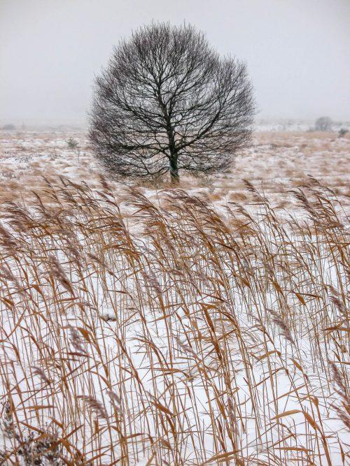 Lost (Fagne Wallonne, Belgium)