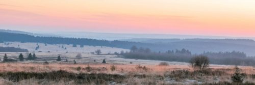 Misty dawn on the Fagnes