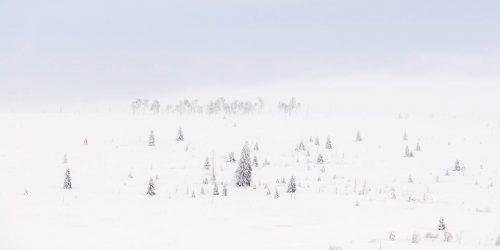 La Fagne Wallonne sort de la brume (Belgique)