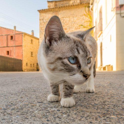 Too curious (Spanish Pyrenees)