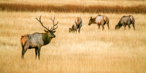 The king and its court (Wyoming)