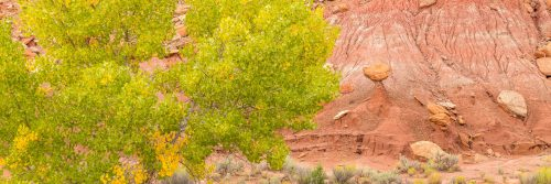 Contrast of the cottonwood foliage against the eroded soil of Wolverine Creek