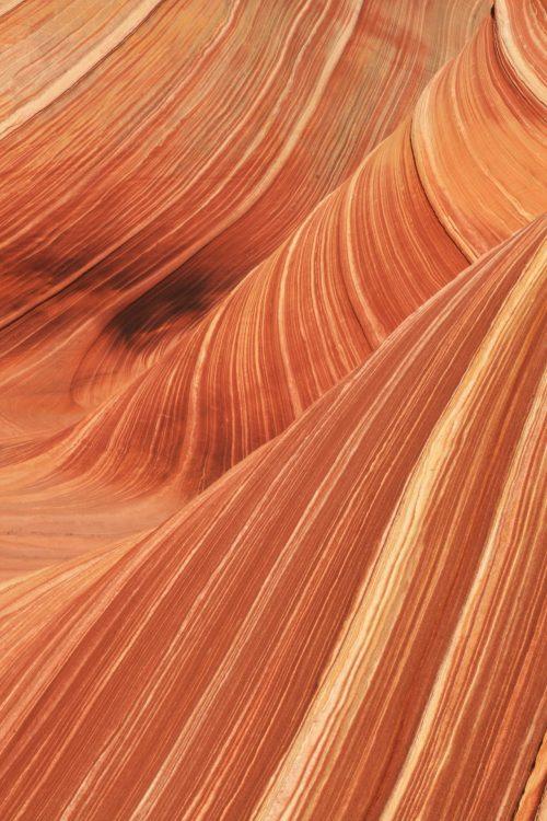 The Wave, details