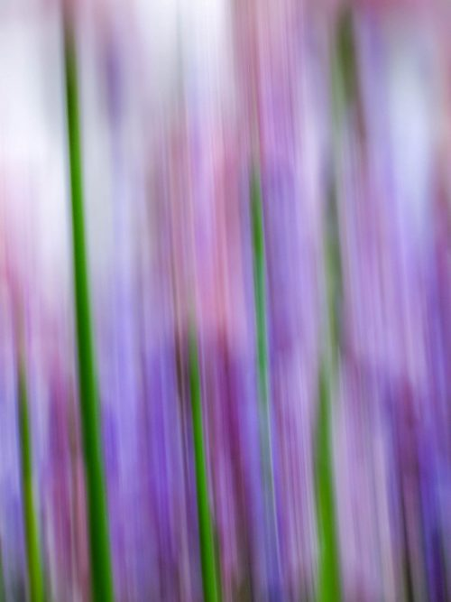 Chives - 1
