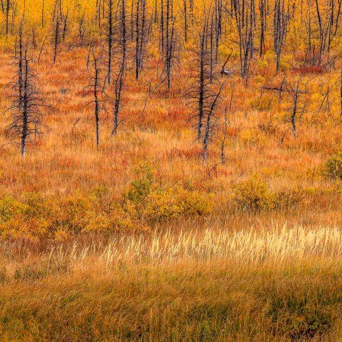 Les squelettes dans la prairie (Montana)