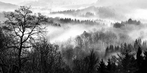 Mist on the Semois - 2