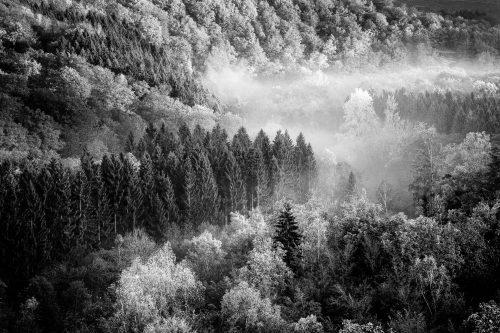 Mist on the Semois - 1