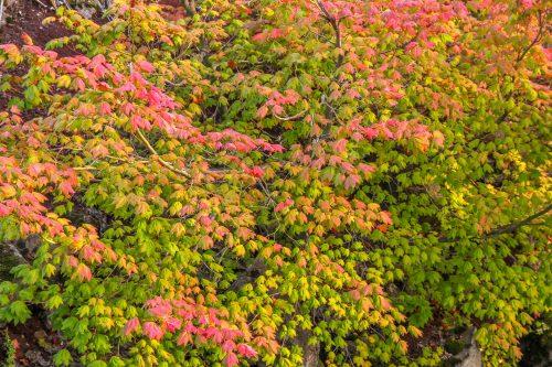 Colourful mix (Oregon)