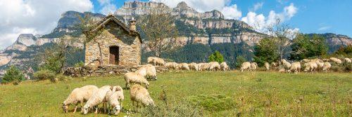 Chapel and sheep