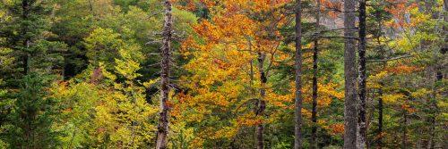 Autumn in the Ordesa Valley