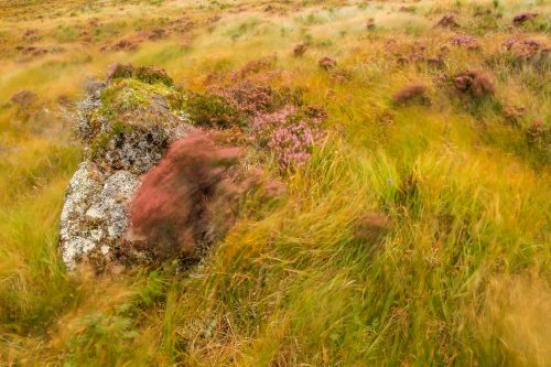 Heather and wind
