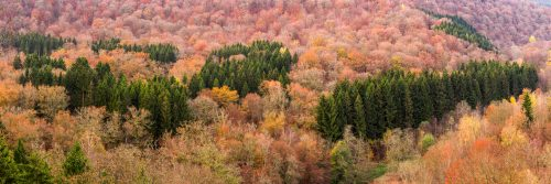 Fond de Conge - Autumn