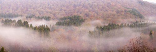Fond de Conge - Mist