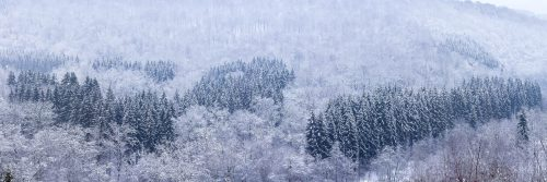 Fond de Conge - Winter