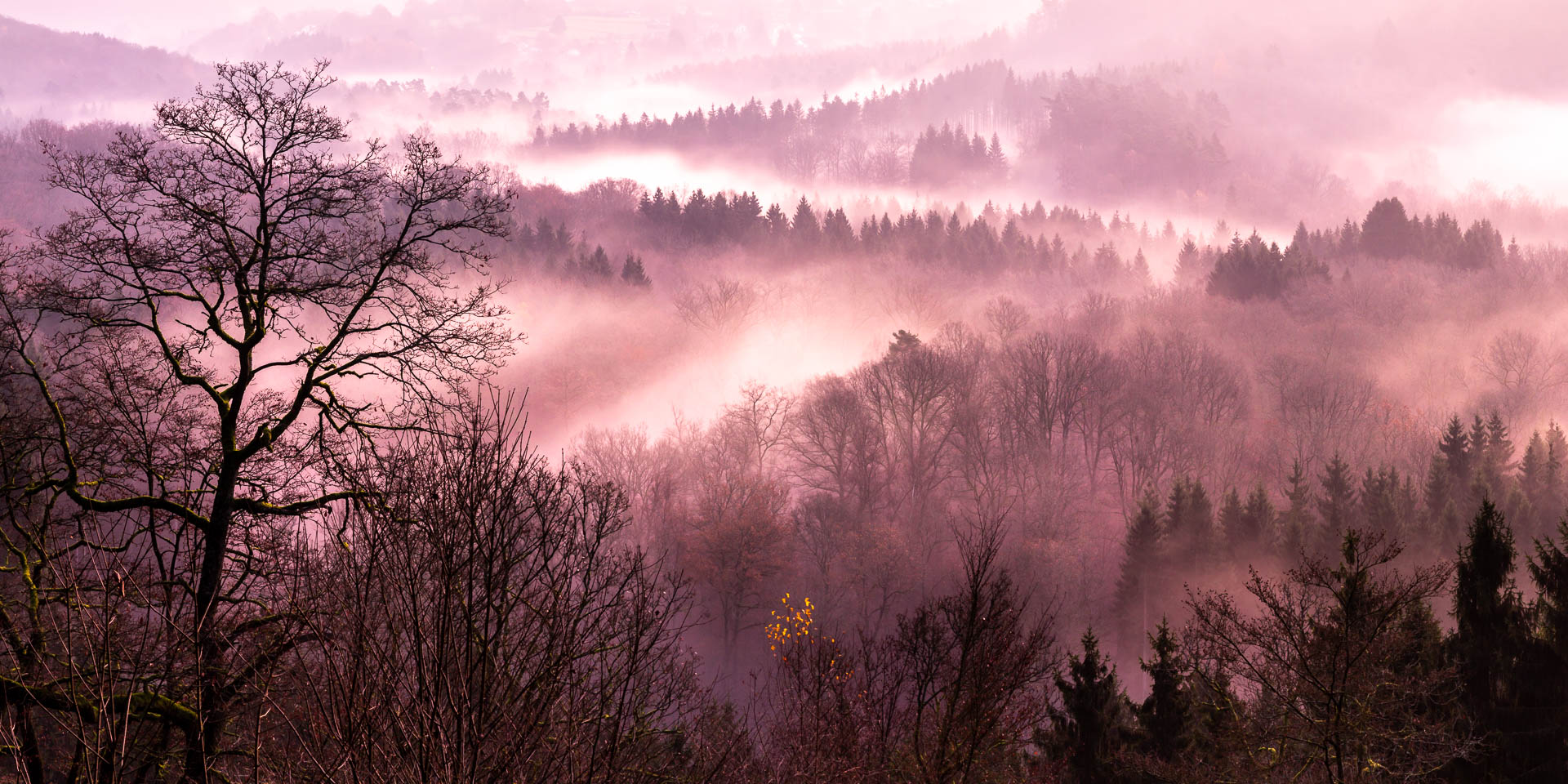 Mist on the Semois (Belgium)