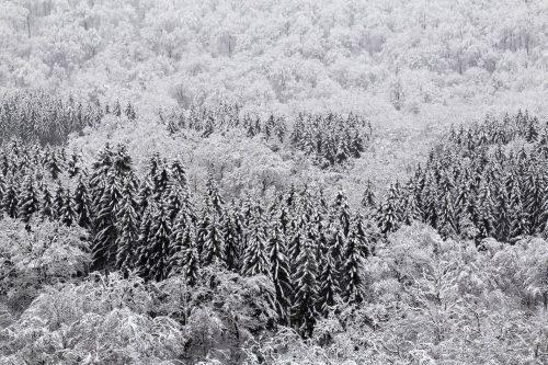 Pinco sous la neige (Lacuisine, Belgique)
