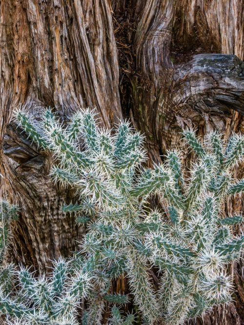 Cactus et tronc